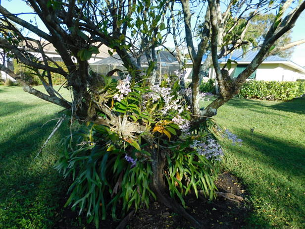10131 Seagrape Way  Real Estate Property Photo #43