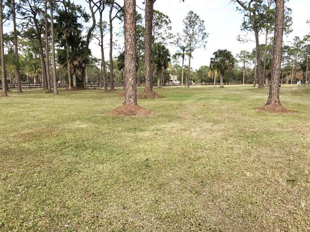 14590 Pepper Bush Drive  Real Estate Property Photo #19